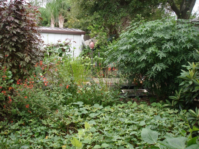 Backyard with native and food producing plants